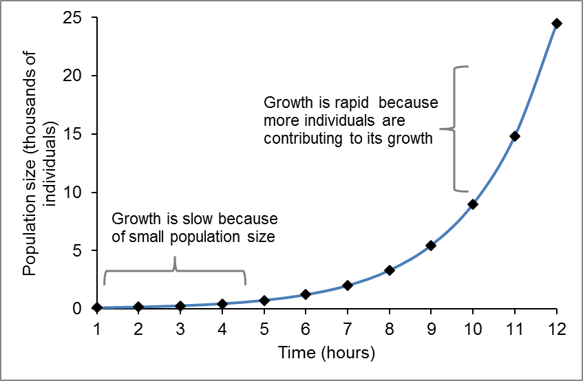 A line graph where the x axis is labeled Time (hours) and the y axis is labeled population size (# of individuals). As time passes the population begins to grow exponentially.