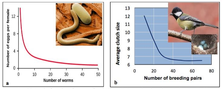 A two part image labeled a and b. Part a shows a graph where the x axis is labeled number of worms and the y axis is number of eggs per female. As the number of worms increases the number of eggs per female decreases. Part b shows number of breeding pairs along the x axis and average clutch size along the y axis. As number of breeding pairs increases clutch size decreases.