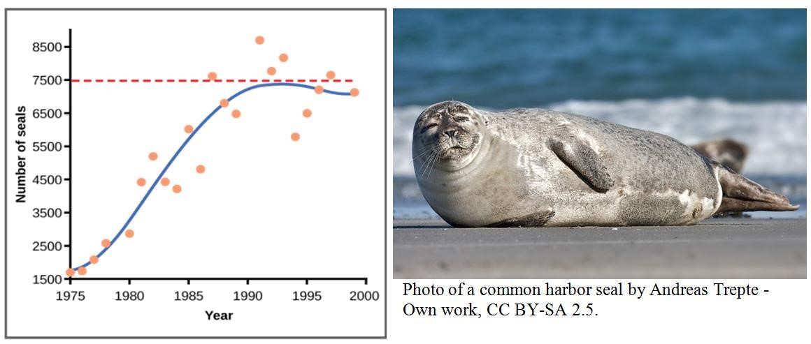 A two part image where the first part shows a seal resting on rocks and the second part shows a graph where the x axis is labeled year and the y axis is labeled number of seals. The number of seals grows until 7500 where it hovers around as the years pass.