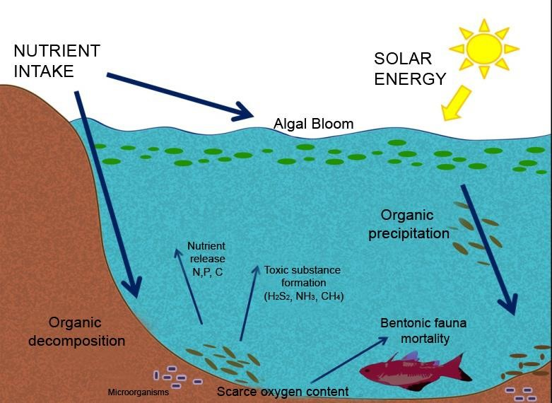 Eutrophication process representation leading to algal blooms